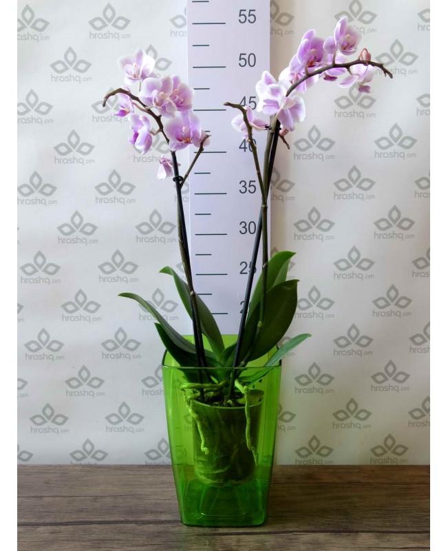 """Кашпо для орхидей """"Сильвия"""", зеленый"""