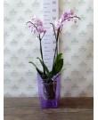 """Кашпо для орхидей """"Сильвия"""", фиолетовый"""