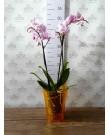 """Кашпо для орхидей """"Тиса"""", оранжевый"""