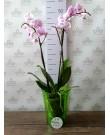 """Кашпо для орхидей """"Тиса"""", зеленый"""