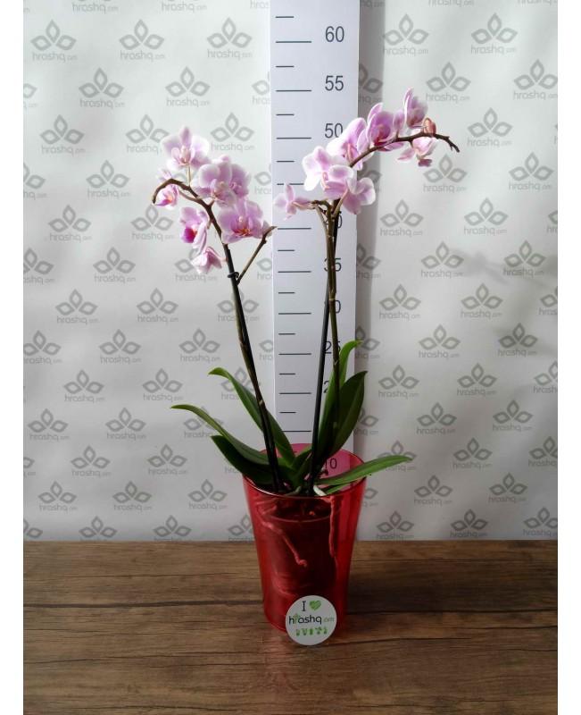 """Кашпо для орхидей """"Тиса"""", красный"""