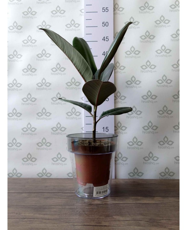 """Кашпо для орхидей """"Протея"""", дымка ободок"""