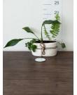 Микс Растение в Керамическом Горшке
